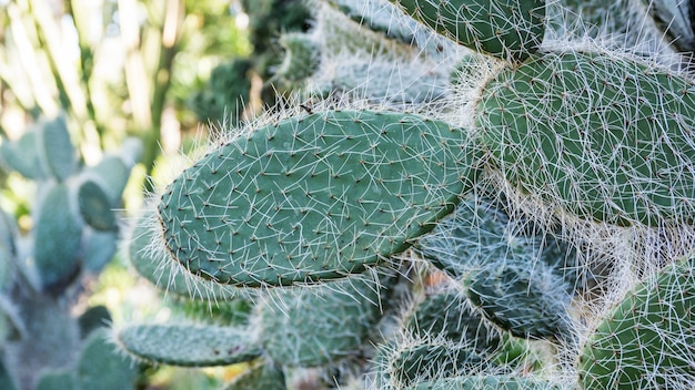 Close up of cactus in a garden. Premium Photo