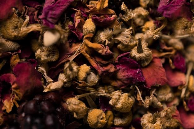 Макро коллекция ароматических цветов Бесплатные Фотографии