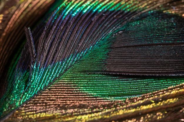 클로즈업 화려한 깃털 유기 배경 무료 사진