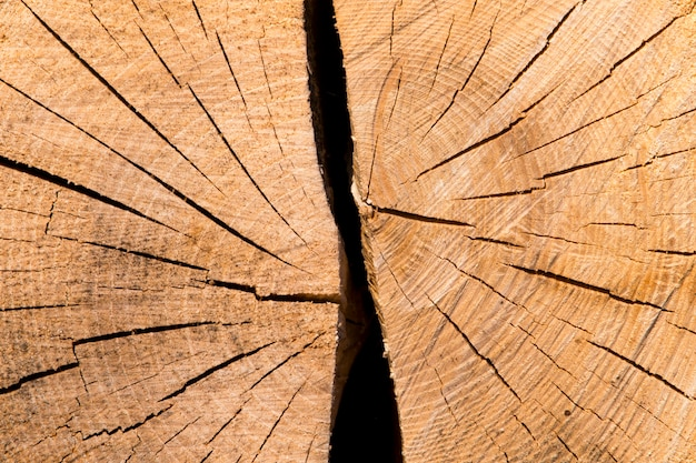 Close up core tree of cut tree trunk background. split into two parts Premium Photo