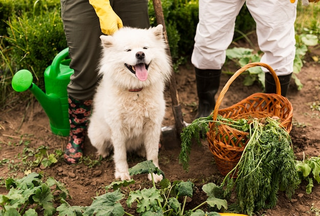 Close-up couple with dog in garden Free Photo