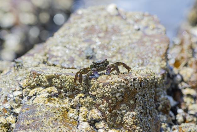 Primo piano di granchio sulla roccia sulla spiaggia Foto Gratuite