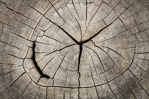 Close up of cut wooden stump with cracks and annual rings as pattern. Premium Photo