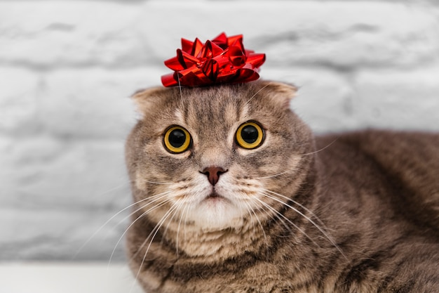 Close up cute cat with red ribbon in head Free Photo