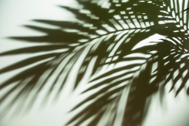 Close-up of dark green blurred palm leaves shadow on white backdrop Free Photo