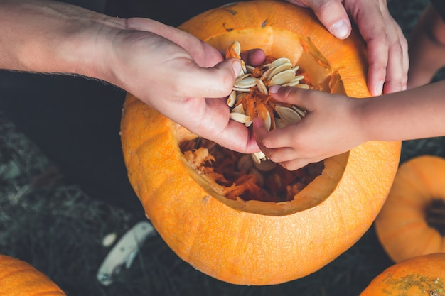 A close up of daughter and father hand who pulls seeds from a pumpkin halloween. Premium Photo