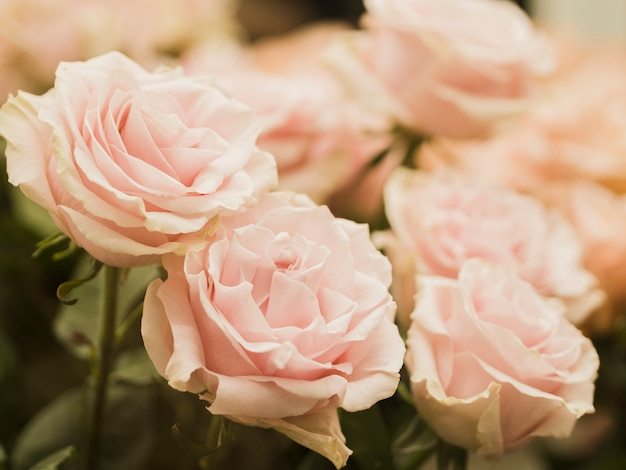Close up of delicate wedding flowers Free Photo