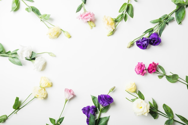 Close-up of different types of flowers on white background Free Photo