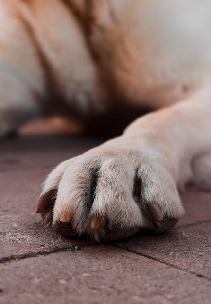 Close-up of a dog leg. Premium Photo