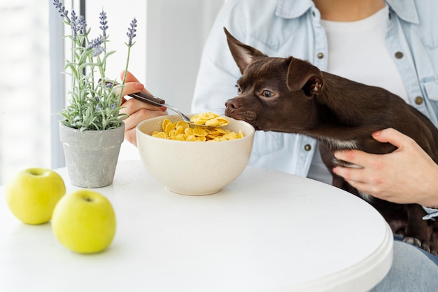 穀物を嗅ぐクローズアップ犬 無料写真