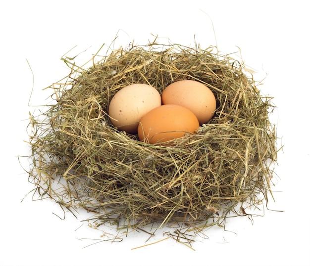 巣の中で卵をクローズアップ Premium写真