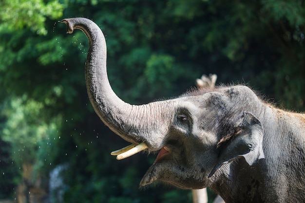 Close-up of elephant with raised trunk Free Photo