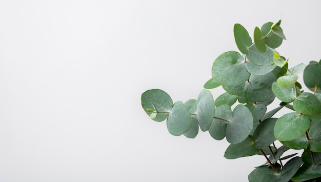 Close-up environmental plant with copy space Premium Photo