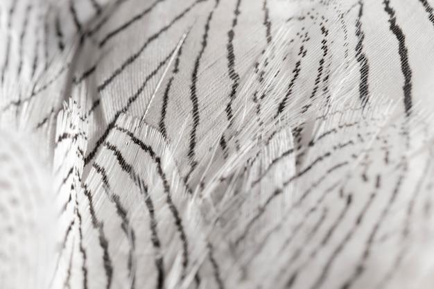 Piume del primo piano con linee nere Foto Gratuite