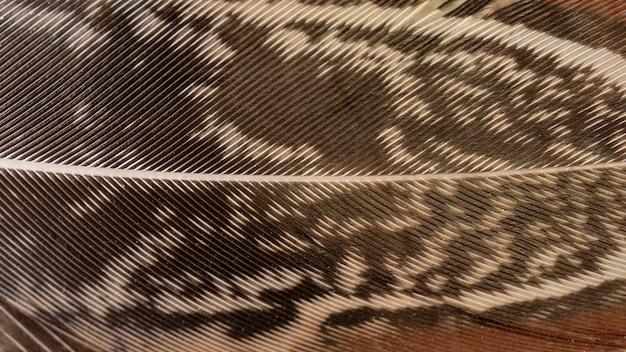 Piume di primo piano con motivo Foto Gratuite
