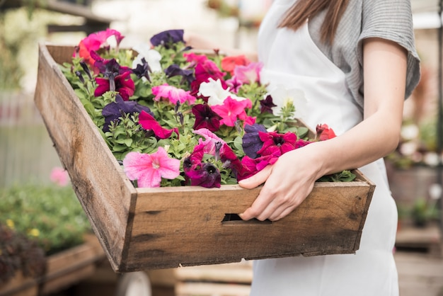 Close-up of a female florist holding big wooden box with colorful petunias flowering plants Free Photo
