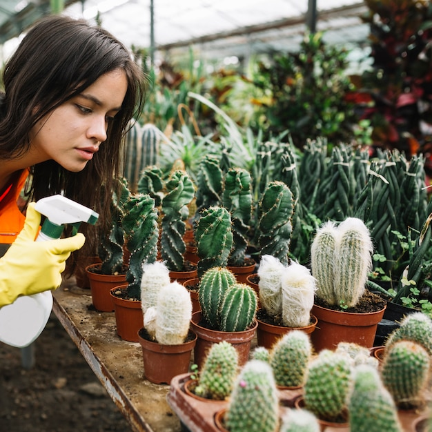 Close-up of a female gardener spraying water on succulent plants Free Photo