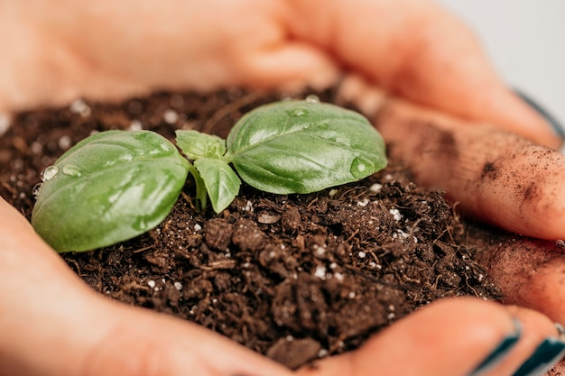 Close-up of female hands holding soil and little plant Free Photo