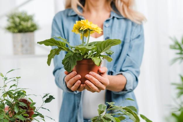 Close-up female holding flower pot Free Photo