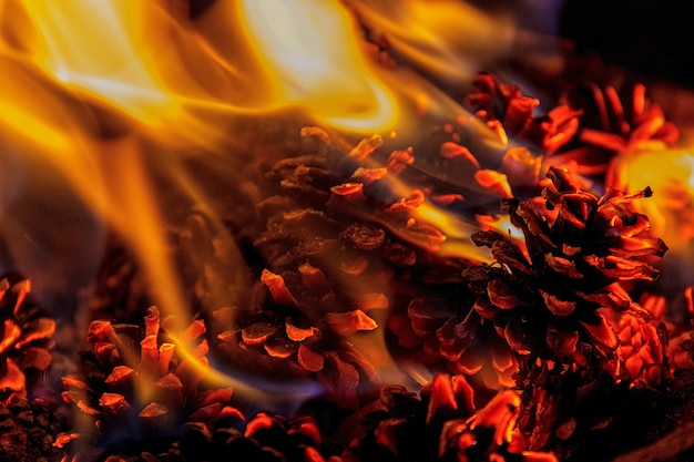 Close up on a fire with pine cones Premium Photo