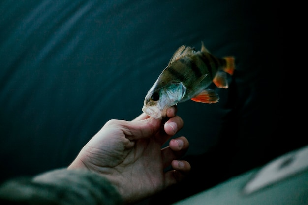 Close-up of a fisherman's hand with fresh fish Free Photo