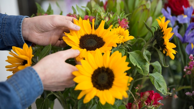 Close-up of florist's hand holding yellow sunflower in the bouquet Free Photo