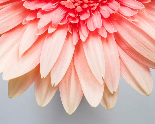 Close-up di petali di fiori Foto Gratuite
