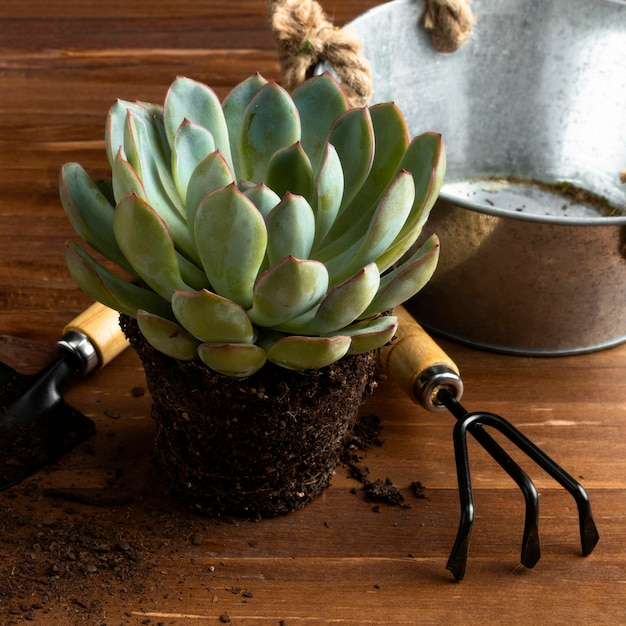 Close-up flower pot and tools Free Photo