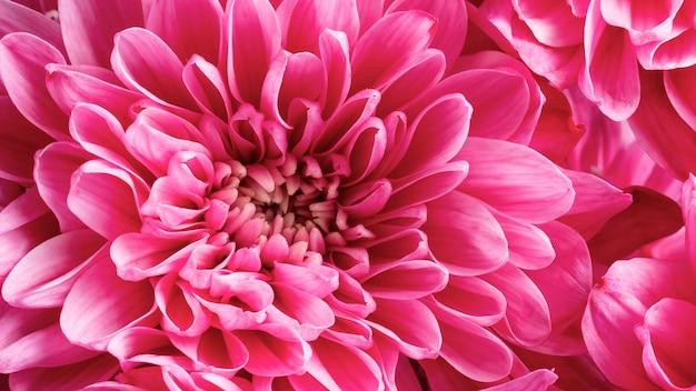 분홍색 꽃잎과 근접 꽃 무료 사진