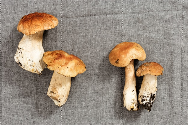 Close-up forest fresh mushrooms, boletus edulis on cloth textured surface. Premium Photo