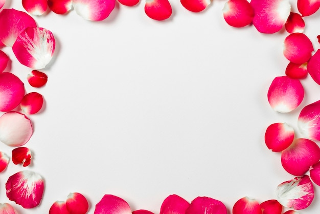 Close-up frame from rose petals Free Photo