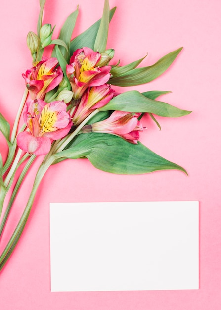 Close-up of fresh beautiful alstroemeria flowers with buds near the blank white card on pink background Free Photo