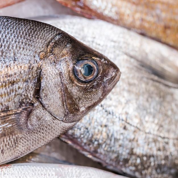 Primo piano del pesce fresco in negozio Foto Gratuite