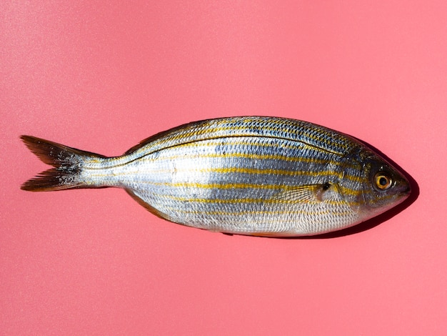 Close-up fresh fish with gills Free Photo