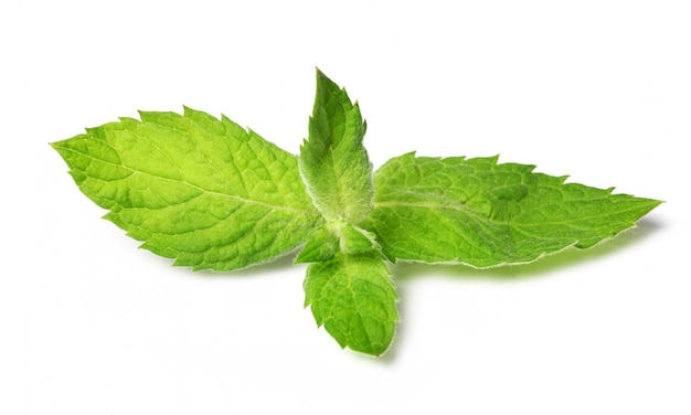 Close up of fresh mint leaves Free Photo