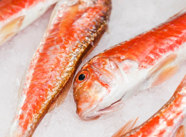 Close-up of fresh red fish on ice Free Photo