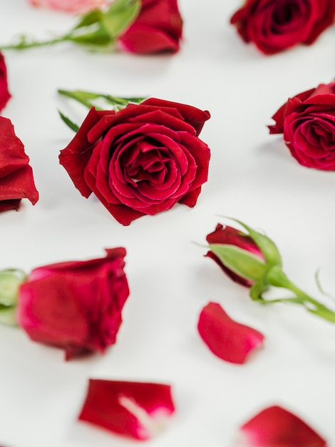 Chiuda in su delle rose rosse fresche Foto Gratuite