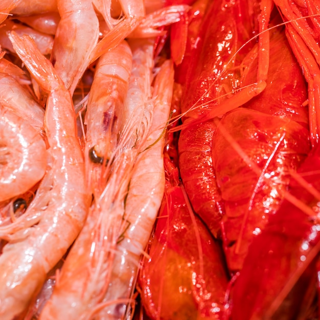 Close-up of fresh shrimps Free Photo