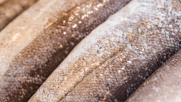 Close-up of frozen fish in shop Free Photo