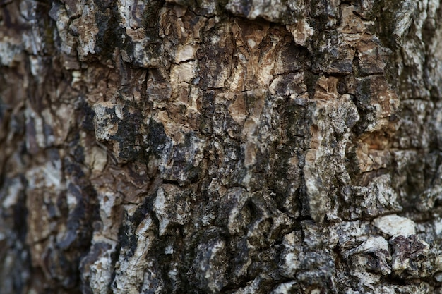 Close up full frame shot old tree bark texture background Premium Photo