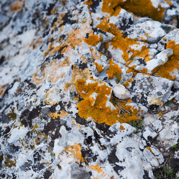 Close-up of fungus with moss on weathered rock Free Photo