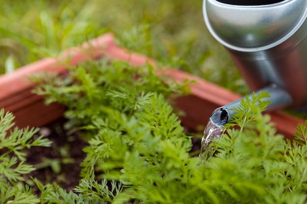 Крупный план полива растений садовником с разбрызгивателем Бесплатные Фотографии