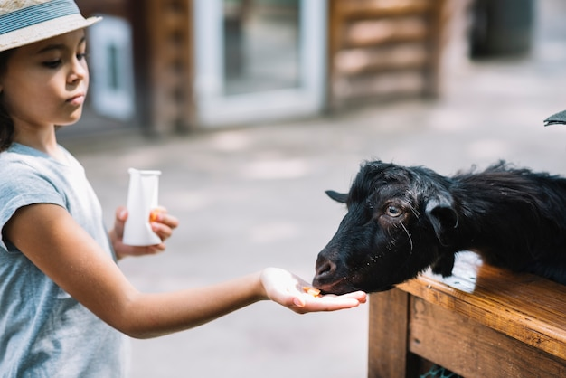 Close-up of a girl feeding food to black goat Free Photo