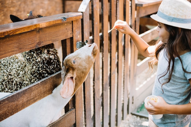 Close-up of a girl feeding food to goat peeking from fence Free Photo
