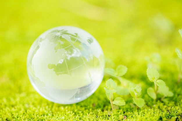 Close up of glass globe in the forest. Free Photo