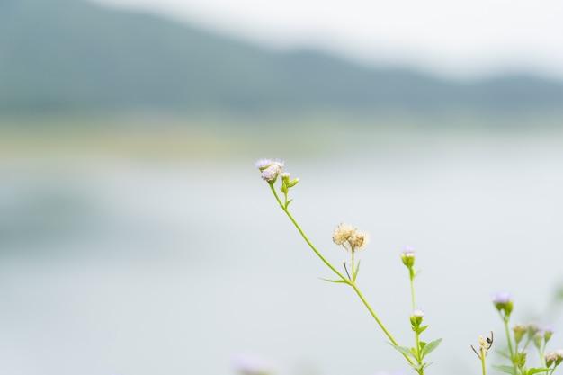 Close up of grass flower over dam. Premium Photo