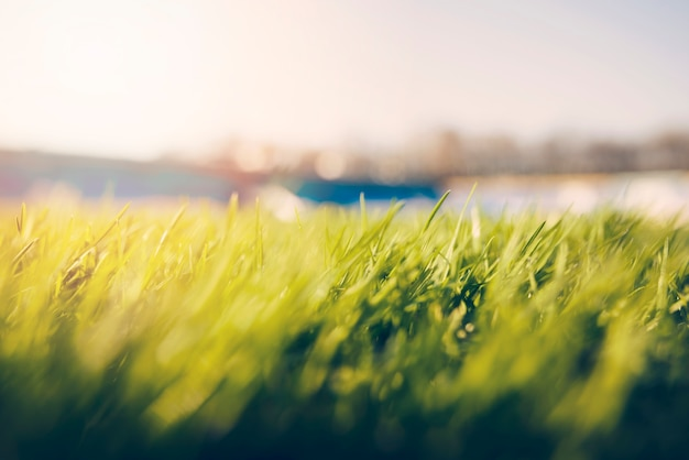 Close-up grass on soccer field Free Photo