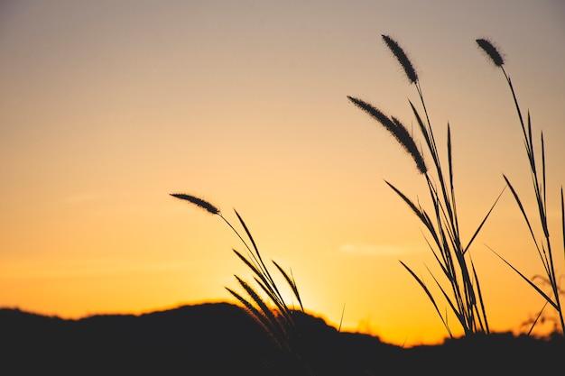 Close up of grass with sunset sky Premium Photo