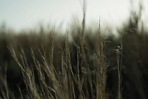 Close-up of grass Free Photo
