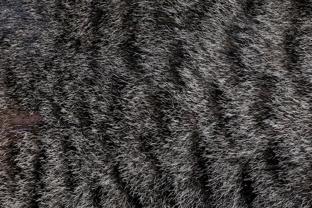 Закройте вверх по серой коже кота для кота и предпосылки Premium Фотографии
